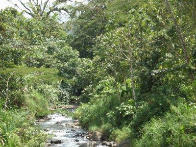 vegetaciondecostarica.JPG