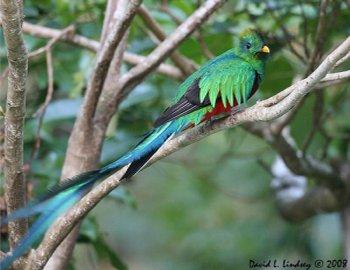 parque nacional los quetzalesjpg