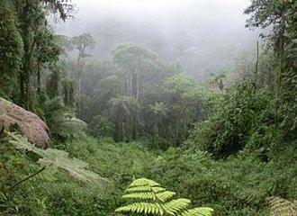 bosquesdecostarica.jpg