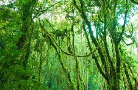 Costa Rica declara los cerros del Parque Nacional Chirripó como símbolo patrio