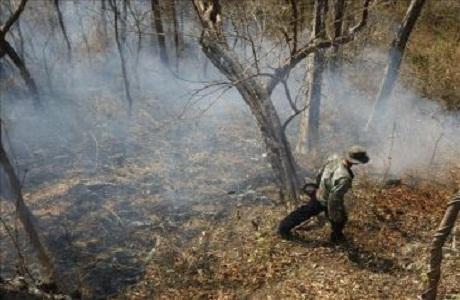 Parque Internacional La Amistad afectado por incendios