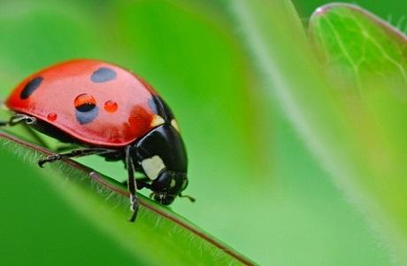 Celebran los 50 Años del Museo de Insectos