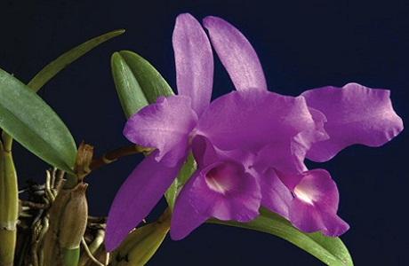 El Parque Barra Honda y sus orquídeas