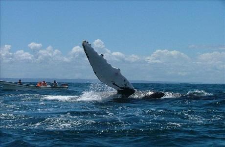 La Ruta de Gigantes, un buen lugar para observar ballenas